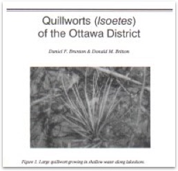 Quillworts (Isoetes) of the Ottawa District