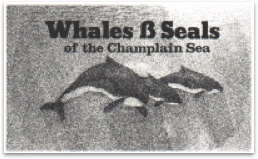 Whales and Seals of the Champlain Sea