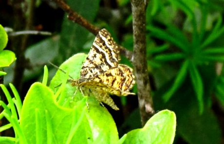 Dark and light striped moth perched on plant.