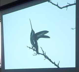 Photo of tropical hummingbird spreading its wings, by Roy John
