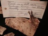 Collection label found with turtle bones