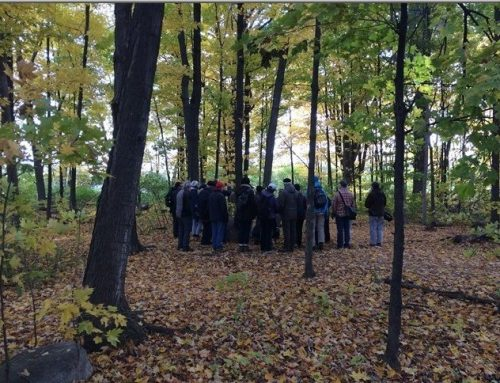 Britannia Conservation Area woods – a forest professional's view