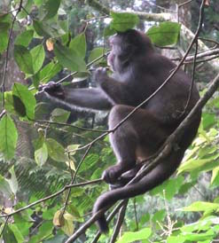 Photo of Formosan Rock Monkey in Taiwan