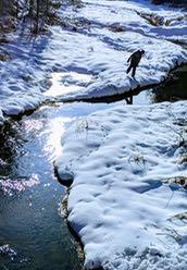 Photo of Macoun Field Club member searching snowy creek banks for aquatic life