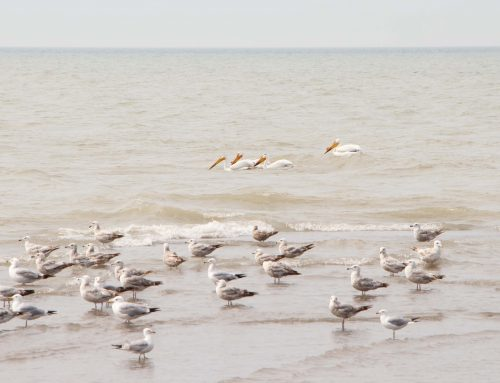 OFNC Point Pelee Bus Excursion – May 9-13, 2019