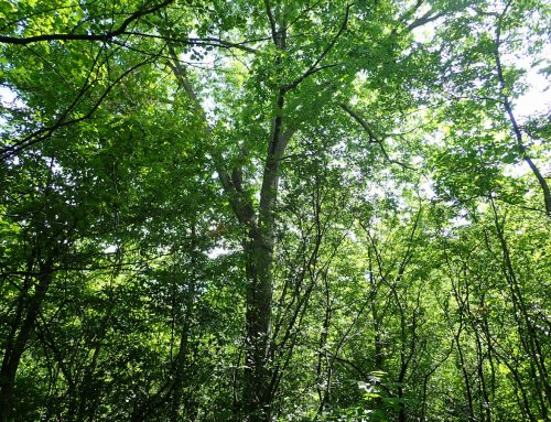 Carlington Woods – a fine place for a nature walk