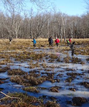 Photo of Macoun Club members exploring a sedgy, frozen pond in the Macoun Club Nature Study Area