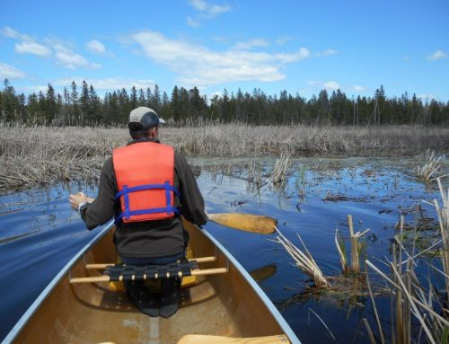 Hunting for the elusive Blanding's Turtle