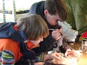 Photo of Macoun Club members using a dissecting microscope