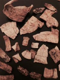 Unidentified turtle bones
