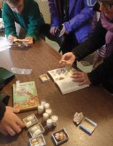 Photo of Macoun Club members identifying seashells using field guides