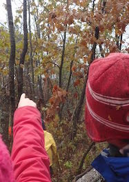 Photo of Macoun Club member's hand pointing to Porcupine up in tree