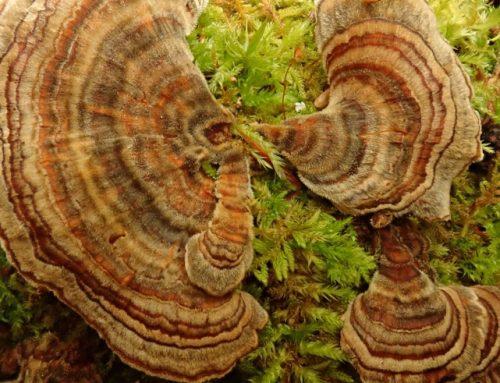 Mycology Ottawa