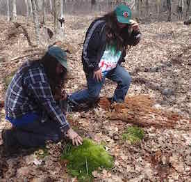 Photo of two brothers getting down on the ground to examine their study moss (Dicranum scoparium)