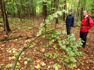 Photo of Macoun Club members standing a bent-over sapling back up