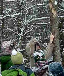 Photo of Rob Lee pointing to first sign of Emerald Ash Borer in Study Area