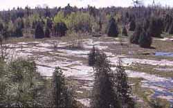 Photo of bare sandstone expanse in Macoun Club Study Area