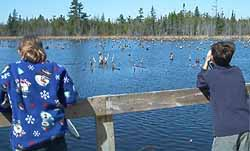 Photo of Macoun Club members viewing beaverpond from Sarsaparilla Trail observation dock