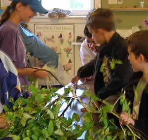 Photo of Macoun Club members eagerly examining a live Leatherwood shrub indoors