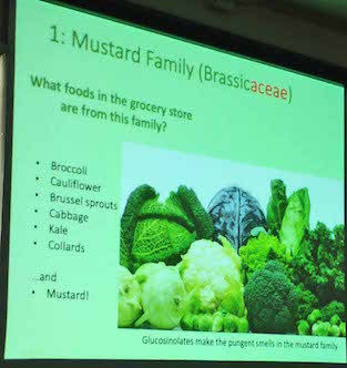 Photo of presentation slide showing grocery-store produce in the Mustard family