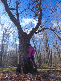Photo of Macoun Club member with her Study Tree, a Red Maple
