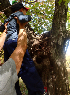 Photo of Macoun Club parent lifting child up to see inside a Study Tree