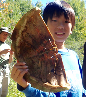 Photo of Macoun Club boy holding up skeletal Snapping Turtle shell