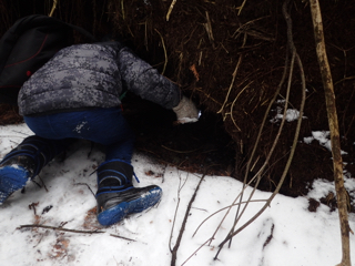 Photo of Macoun Club member peering into porcupine den under uprooted tree