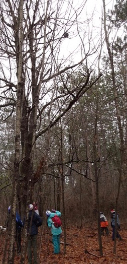 Photo of Macoun Club group gathered under Porcupine high up in a bare hickory
