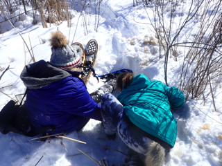 Photo of Macoun Club members trying to retrieve a snowshoe lost under snow that collapsed into swamp water