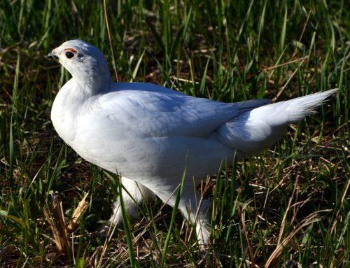 Rare Bird Reports