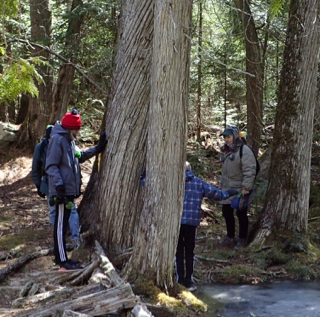 Photo of Macoun Cub leader and members examining old-growth Eastern White Cedars (Thuja occidentalis)